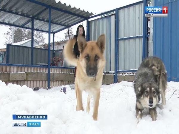 Дом для бездомных В Муравленко откроют приют для бесхозных кошек и собак