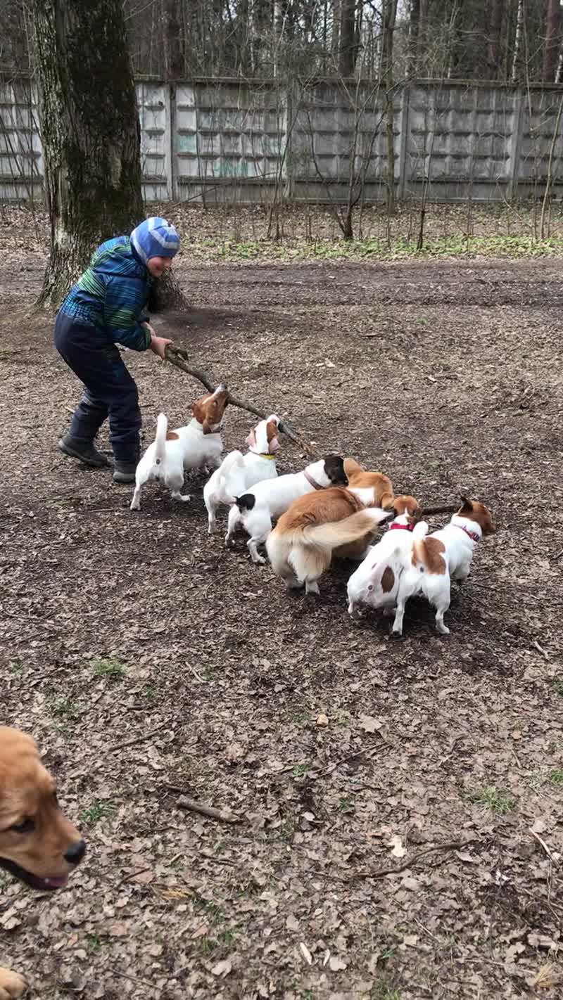 Прогулка в лесу с 6ю собаками