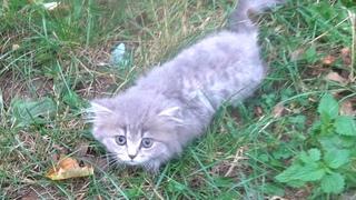 Someone abandoned fluffy kitten