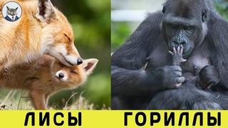 МАТЕРИ В ДЕЛЕ! Самые Лучшие Матери Животного Мира